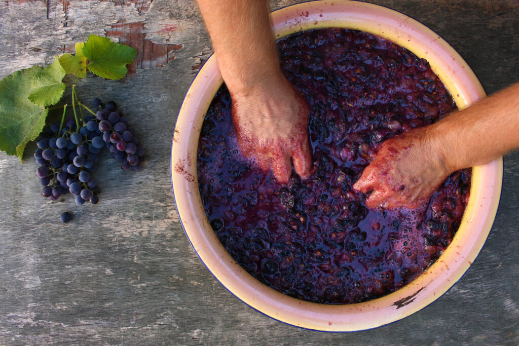 the process of making merlot red wine
